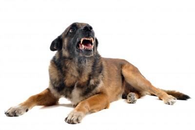 מריבות בין כלבים