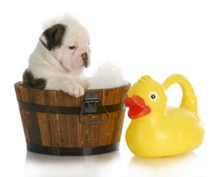 לאמץ גור כלבים