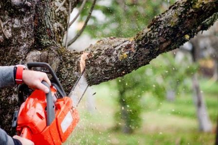 גיזום עצים למניעת סכנות
