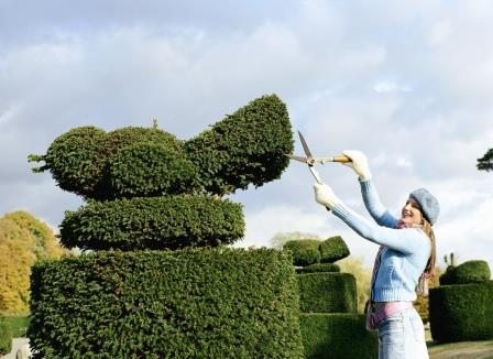 גיזום עצים אומנותי